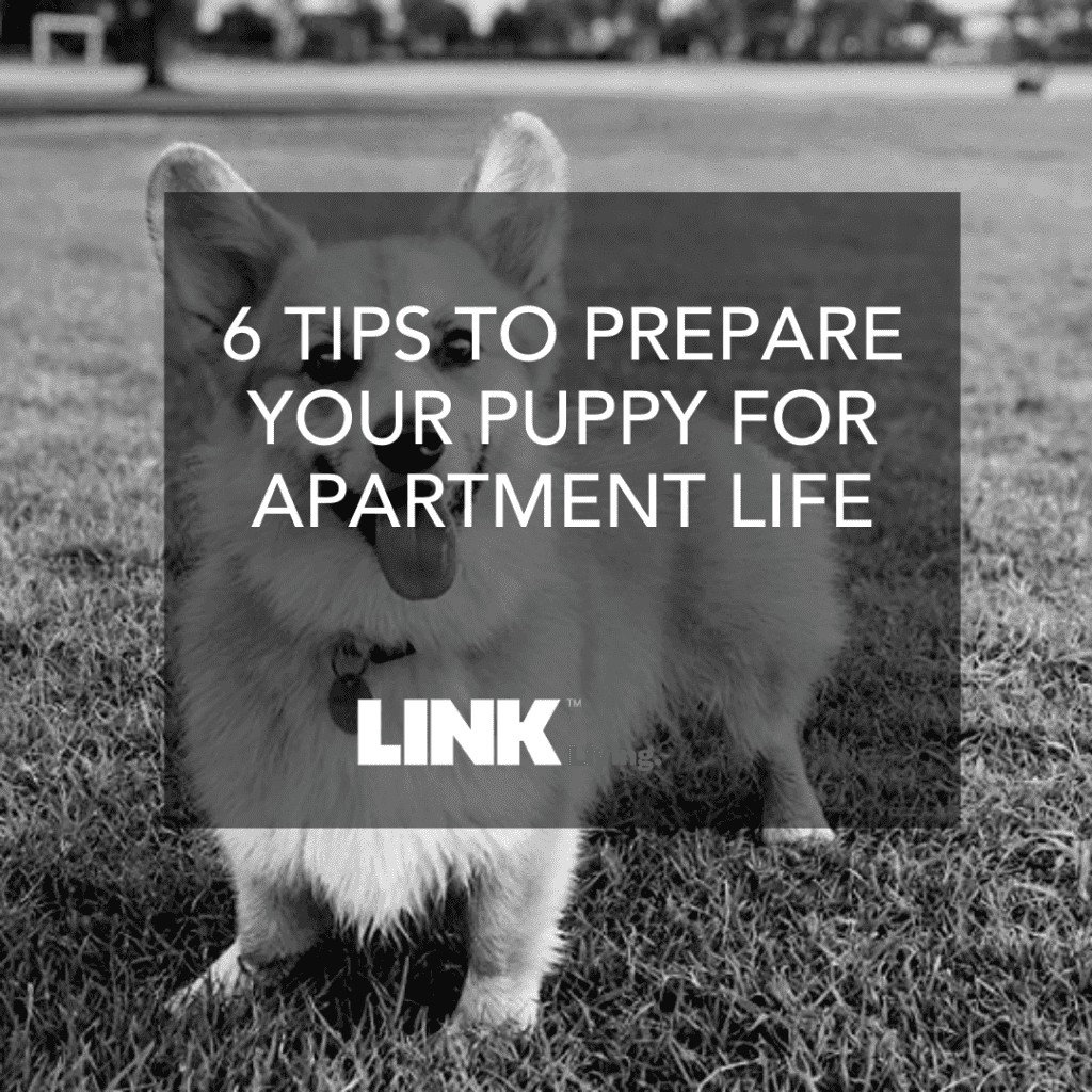 6 tips To Prepare Your Puppy For Apartment Life (1)