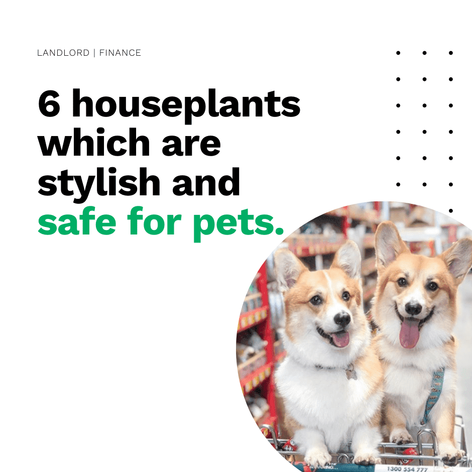6 houseplants which are stylish and safe for pets