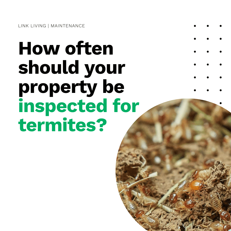How often should your property be inspected for termites_